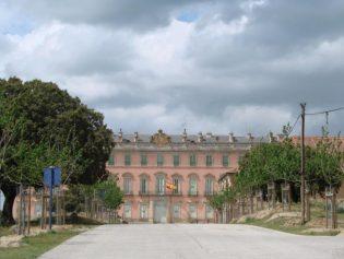 Plantación de Acer. sp. en el Real Sitio de Riofrío. (Segovia).